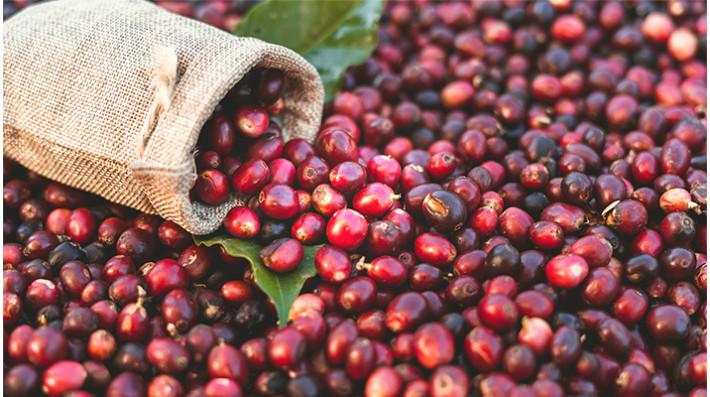 Экспериментальные методы обработки кофе